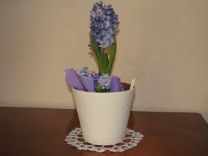 hiacynt -kwiat Wiosny, zapraszam ją do naszego domu, zimie mówimy dość