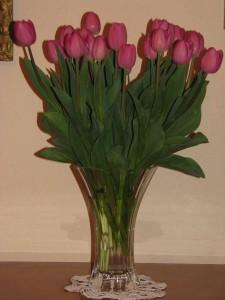 ulubione tulipany