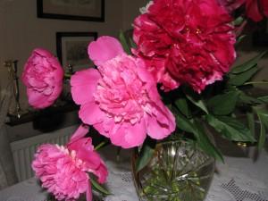 peonie, chińskie kwiaty szczęścia