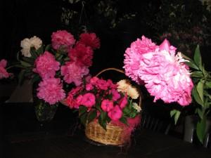 3.06.peonie- chiński kwiat szczęścia