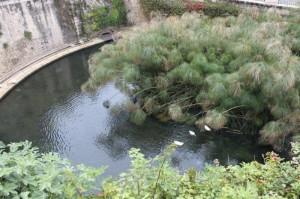 Fonte Aretusa w Syrakuzach
