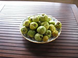owoce pigwy i po prawej stronie dwa jabłuszka pigwowca (te żółte)