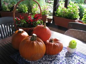 Jesień zachwyca nas kolorami