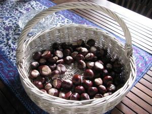 kasztany to znak że jesień w pełni