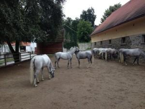 Stadnina koni lipicańskich w Piber