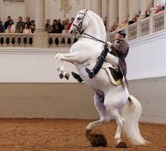 Hiszpańska Dworska Szkoła Jazdy, koń w charakterystycznej lewadzie