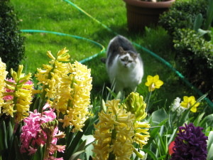 Mój ogród a wnim Mila