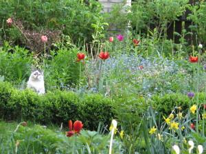 Mila monitoruje ogród od rana do wieczora