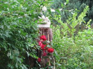 w ogrodzie lipiec